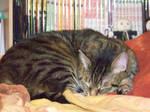 Scapino asleepy II