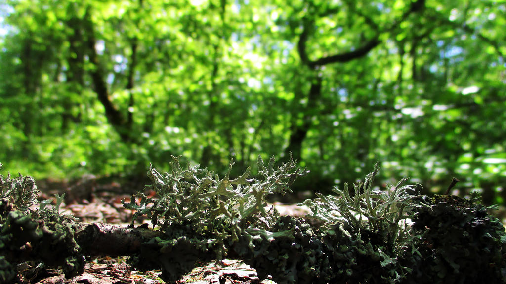 Lichen in Volyn forest by Vixis24m