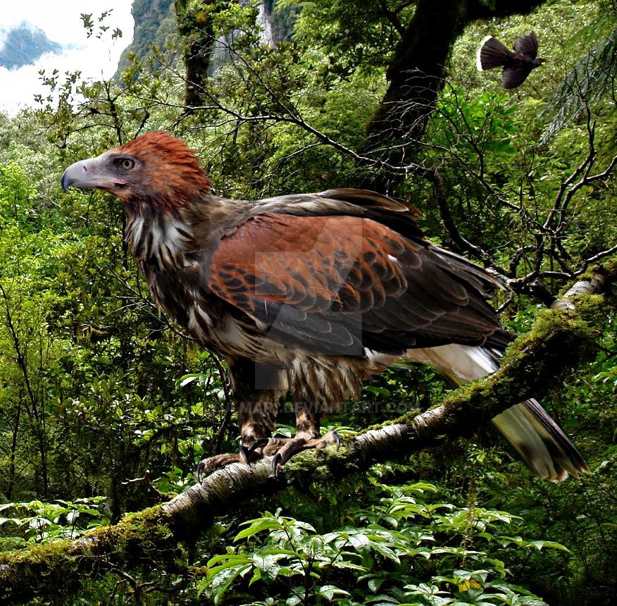 Haast's Eagle by Fulmar1 on DeviantArt