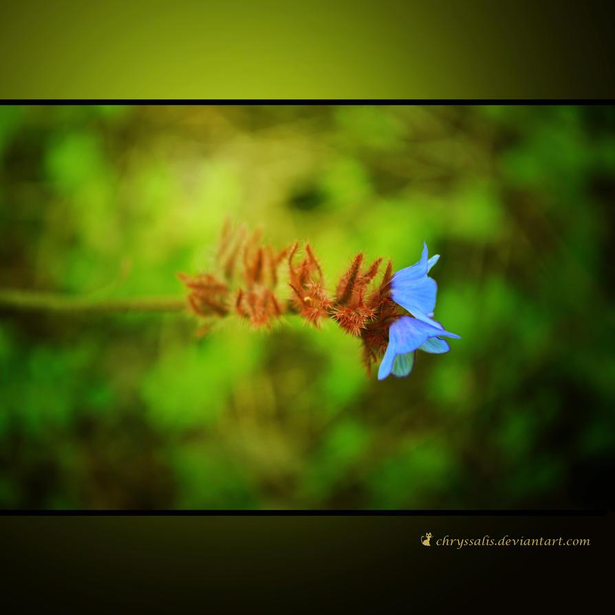 DROWN IN DEEP GREEN.. by chryssalis