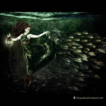 THE PATH AHEAD... by chryssalis