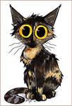 Bo the tortie cat