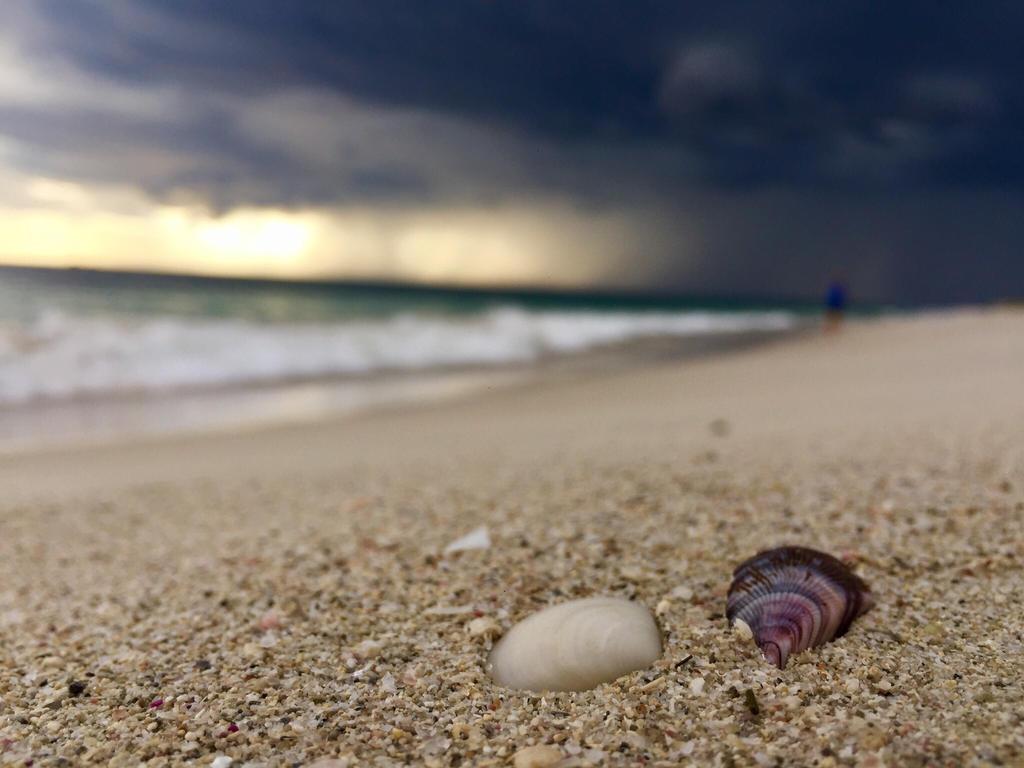 Shells  by cdullard