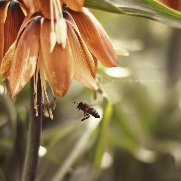 The bee. by OreGaOmaeOMamoru