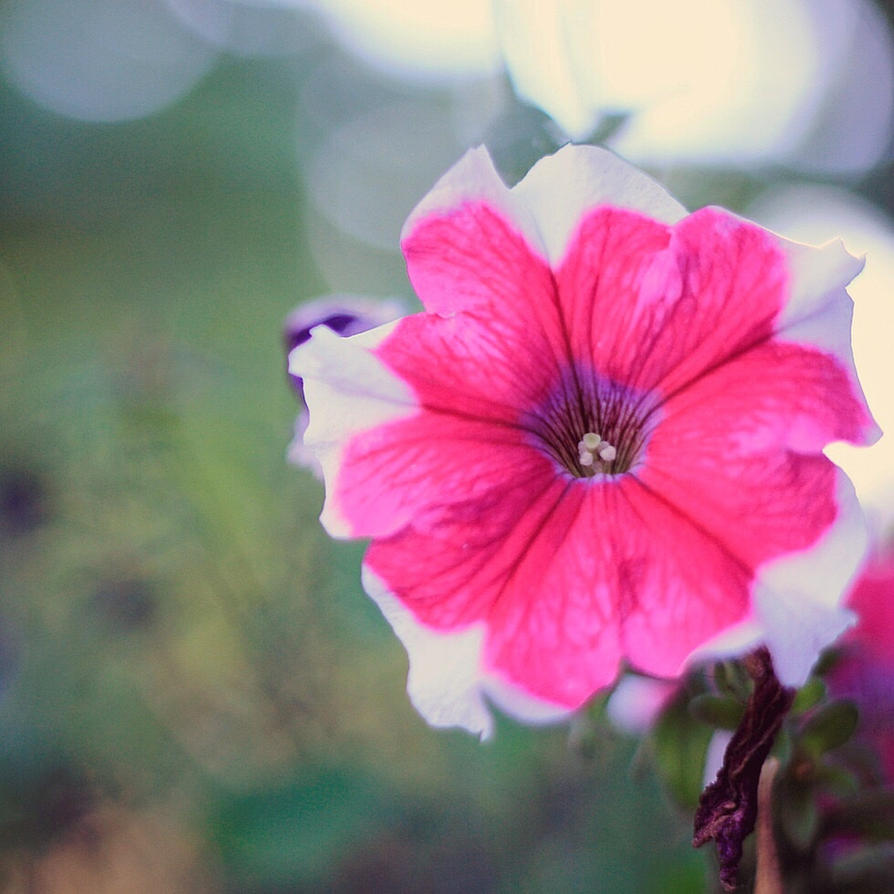 Pink flowers by oregaomaeomamoru on deviantart pink flowers by oregaomaeomamoru mightylinksfo
