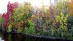 Natural Wonder by fractal1