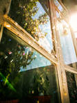 Cobweb on the windows by ideaday