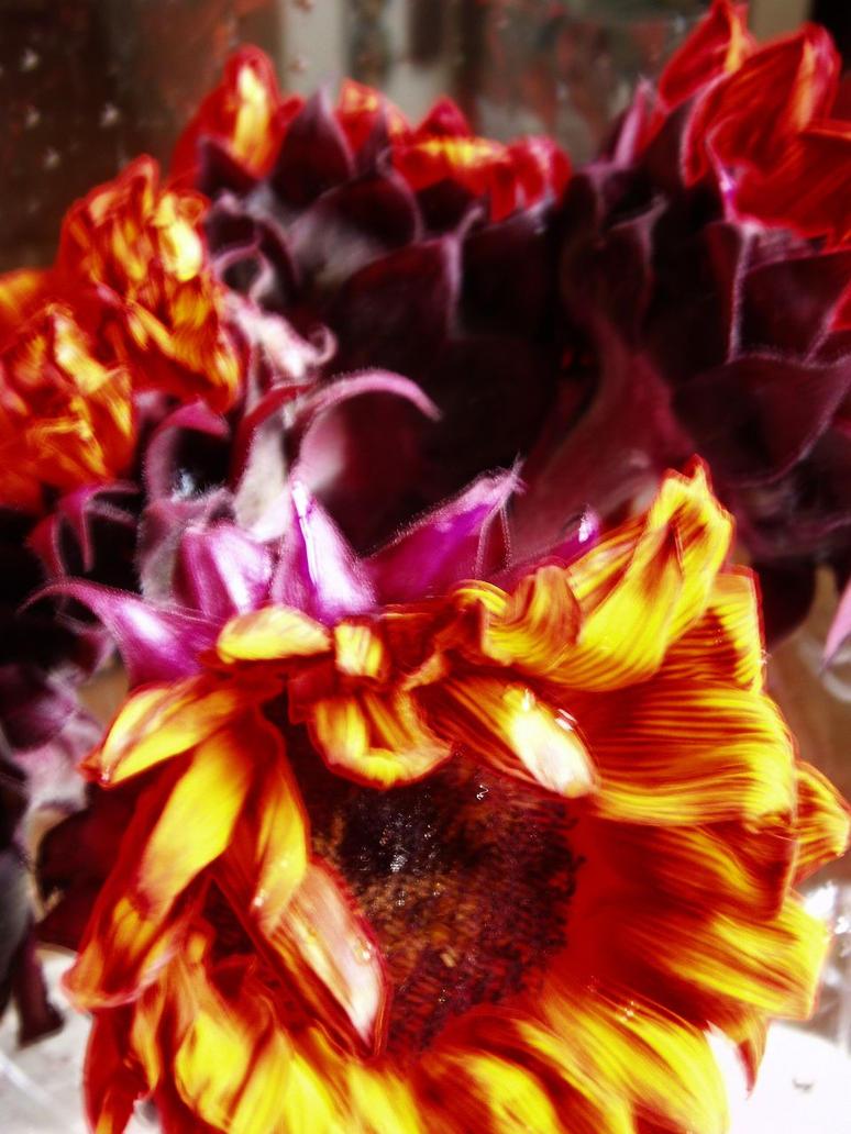 Crimson sunflowers by Sleetwealth