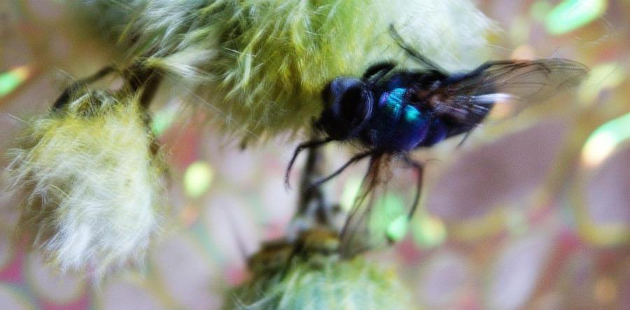 Flywater by Sleetwealth