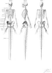 Mermaid skeleton by empyrean