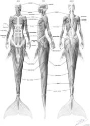Mermaid musculature by empyrean