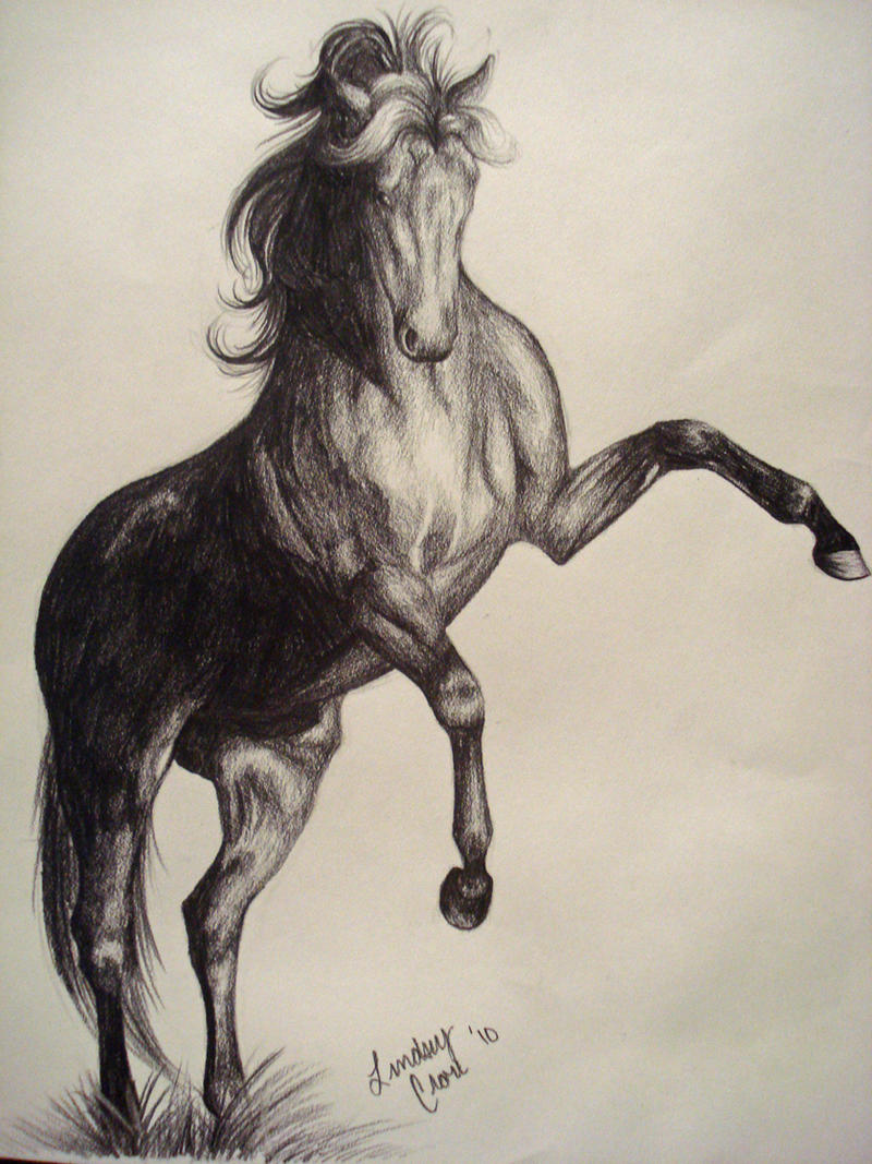What are the best pencil sketches of running horses? - Quora  |Horse Art Drawings