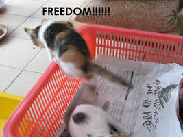 break for freedom by x-o-skeleton