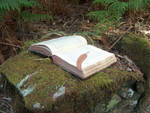 Book in Woods 6