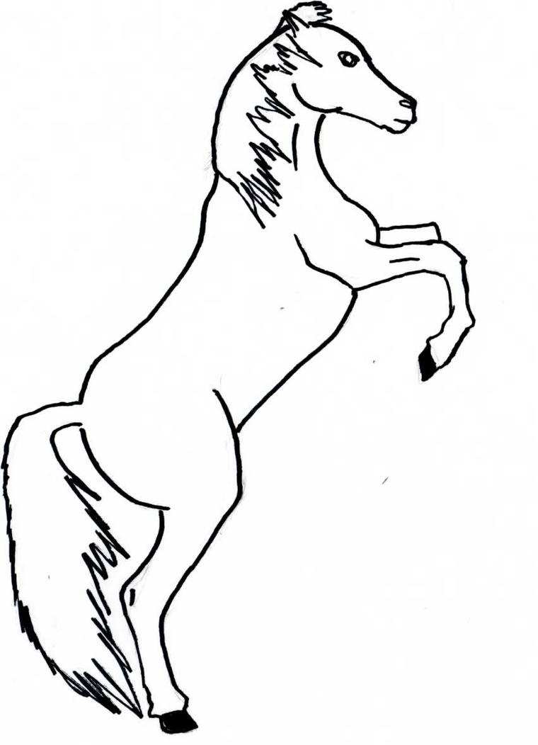 Dessins et Photos [Amy] White_horse_by_amandiera-d32ckrn