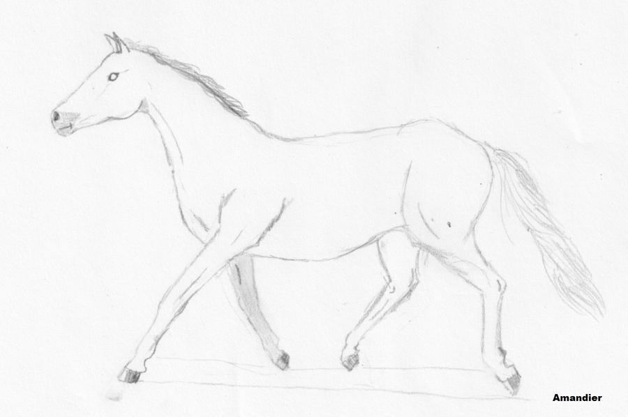 Dessins et Photos [Amy] Horse_by_amandiera-d3l5m8n