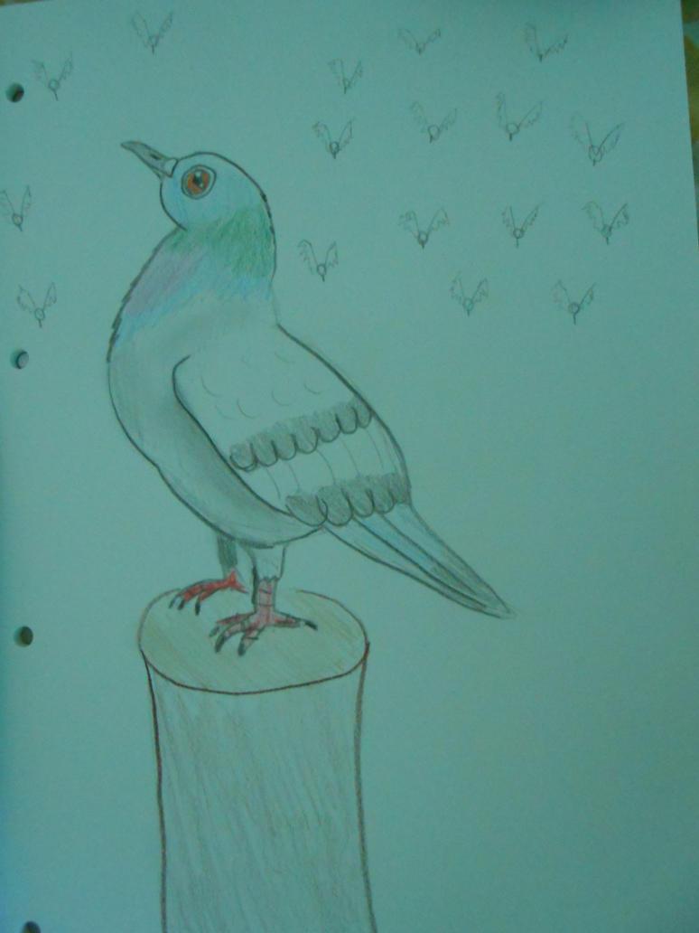 La prairie aux Amandiers - Page 3 Concours_pigeon_by_amandiera-d926mun