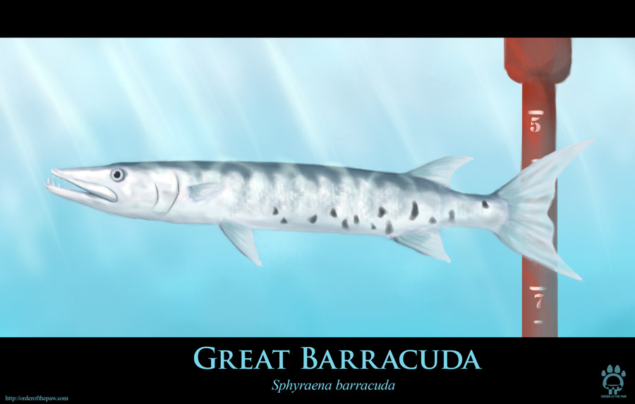 Great Barracuda by Cat-girl-aholic