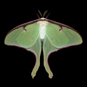 VioletNightStars's Profile Picture