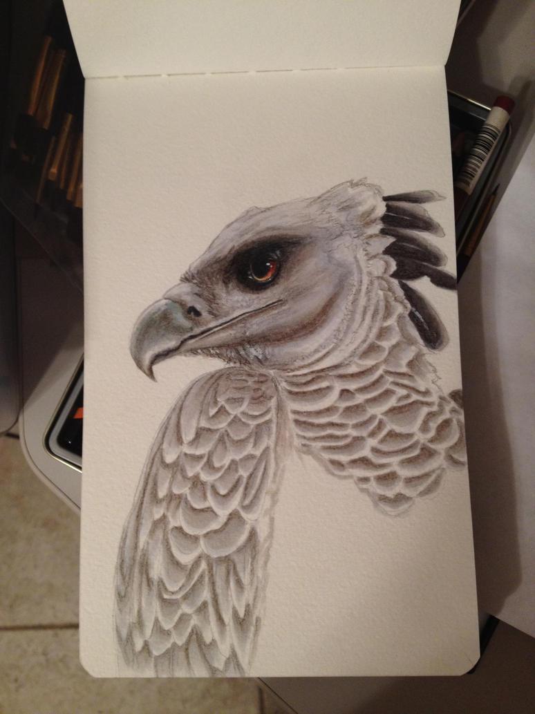 Harpy Eagle Moleskine Sketch by SnowChickenFeeb