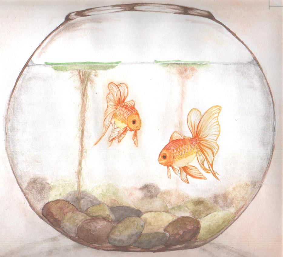 Fishbowl drawing for How to make a fish bowl
