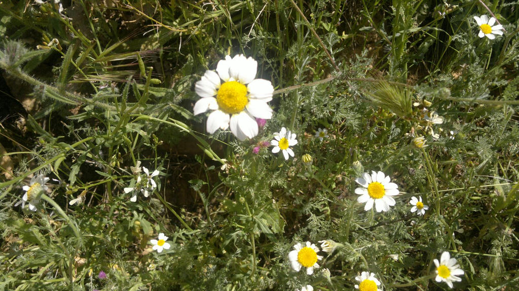 Flowers by eldesastredemaria