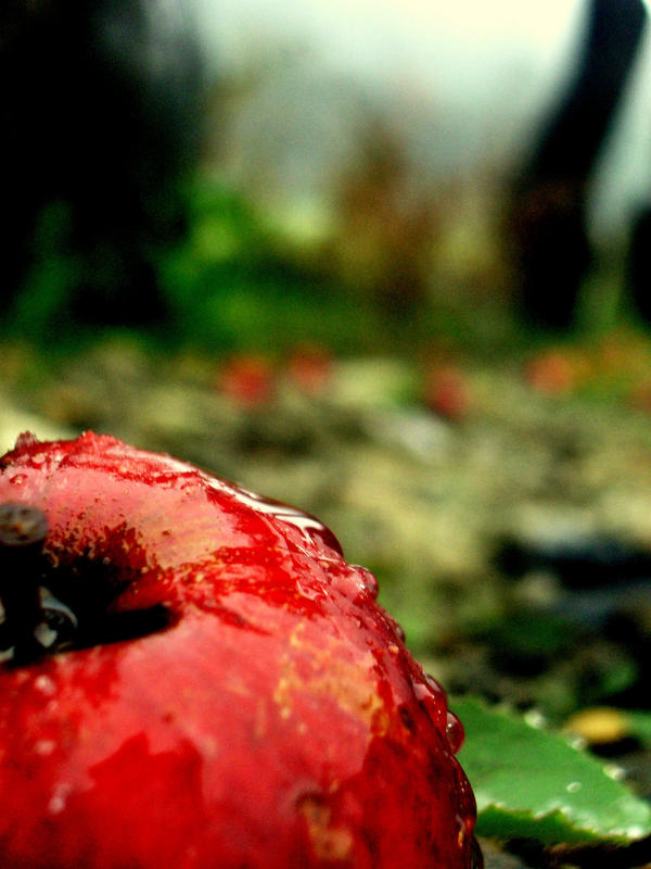 Red apple by NineWhileNine