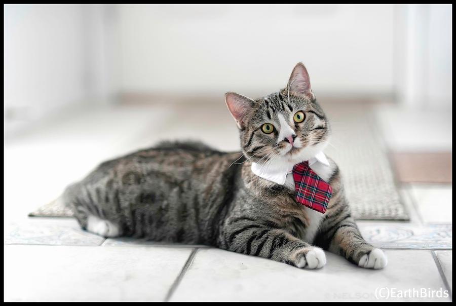 Feline Leadership by EarthBirds