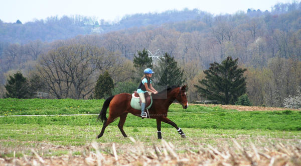 April 18, 2009 Paper Chase 64 by MillyMayhem