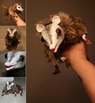 Cuddly possum