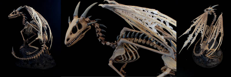 A new Dragon Skeleton