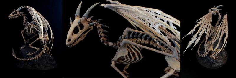 A new Dragon Skeleton