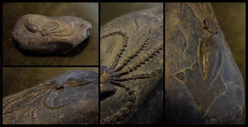 Squid fossil sculpture