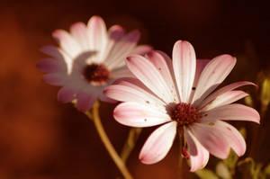 Flower by LordGuardian