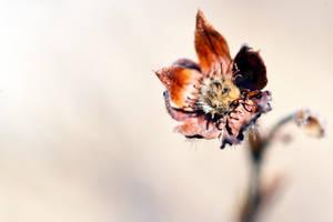 Broken Flower 1 by LordGuardian