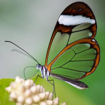 Butterflygarden 002 by LordGuardian