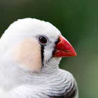 Birdo again by LordGuardian