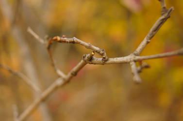 Tiny tree branch by Filon-kun