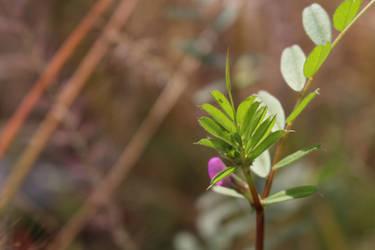 Purple flower by Filon-kun