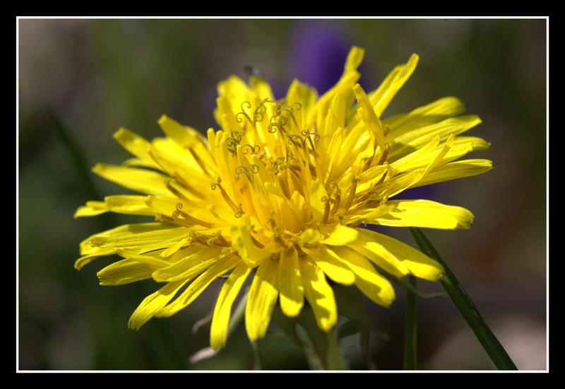 Spring's Yellow Sun