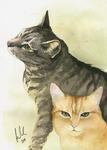 Kitty portraits
