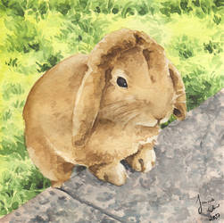 Little rabbit looks like sheep by Toradh