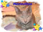 My Kittycat