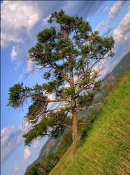 Kilter - midsummer by wb-skinner