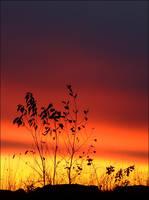 Summer Sky Goodbye by wb-skinner