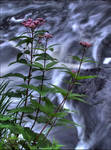 Fall of the Wild Flower 2