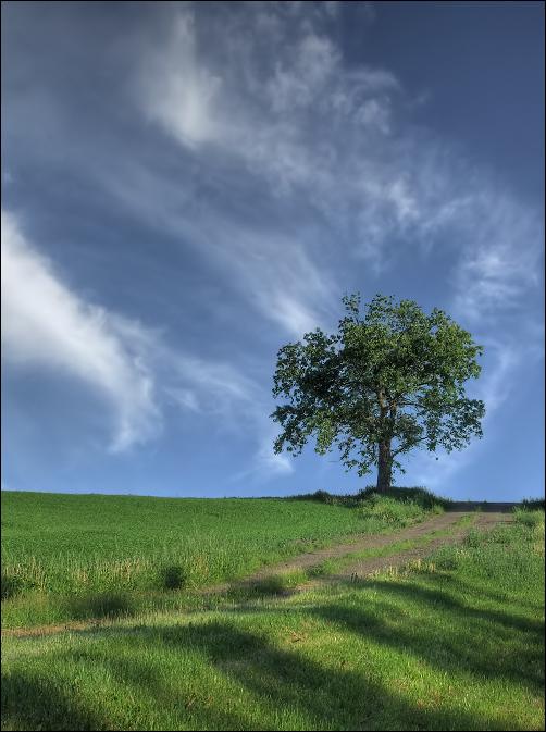 Under Big Summer Sky by wb-skinner