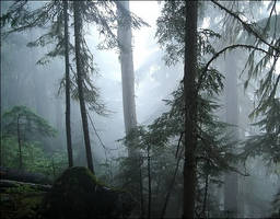 Forest in the Clouds by wb-skinner