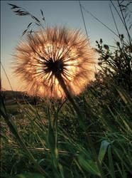 A Flower on Fire 5