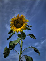 Sun Below the Sky by wb-skinner